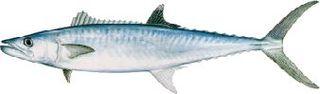 Fishkingmackerel